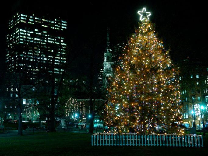 Boston's Christmas Tree
