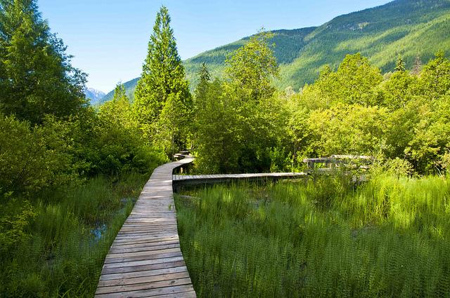 Mount Revelstoke National Park