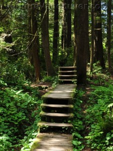pacific-rim-national-park-trail-in-forest-page