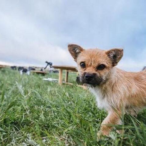 Gobi the dog