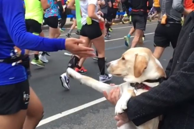 New York City Marathon Dog